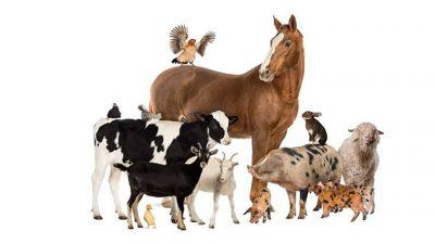 životinje - anmals in serbian